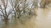 desastre : Flood between trees on river Rhine as natural disaster (Full HD)