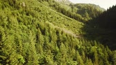 mírumilovný : Aerial tracking shot of wild mountain forest in Rhone-Alpes region in France during summer (HD) Dostupné videozáznamy