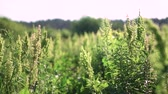 assassino : Beautiful pastel background for your video. Weeds on an overgrown spring field. summer stock theme