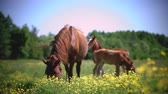 cval : Red horse field against sky and forests. Farm theme. Stock video