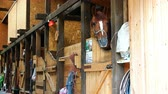 shed : a well-groomed horse is playing playfully in the stables