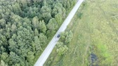 индикатор : the car passes a stretch of road located near the forest. Стоковые видеозаписи