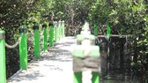 birmania : Mangrove Estuary in Probolinggo Region, Indonesia Filmati Stock