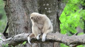 vzít : Monkey sitting on a tree branch Dostupné videozáznamy