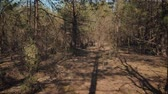 pov : first-person view for a walk through a dense summer forest