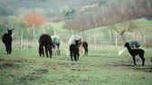 Alpaca breeding, on the Tuscan hills in Italy.