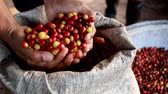 arranjo : Hands pick up dried coffee beans from huge pile Stock Footage