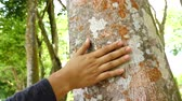 agar : Hand touching agarwood tree Stock Footage