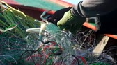 krab : Fishermen catching crab from the sea Wideo