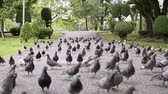plantas : Group of dove are walking and flying in public park.