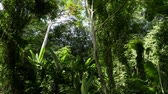 plantas : Tropical rain forest under sunlight in phuket, Thailand.