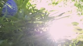 plantas : Green leaves of trees against sun rays, Sun shining through green leaves in the jungle.