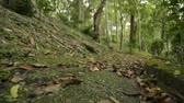 plantas : Moving forward with low angle view to the ground in natural park. Stock Footage