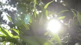 plantas : Shimmering sunrays behind tropical plants, Beauty of sun shining through the green leaves of the tree, Abstract bokeh with sun flare.