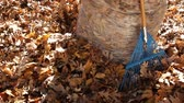 грабли : Cleaning up Autum Leaves