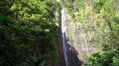 Waterfall in Maui Hawaii Стоковые видеозаписи
