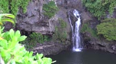 Мауи : Waterfall in Maui Hawaii Стоковые видеозаписи