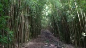 Мауи : Bamboo Forest in Hawaii Стоковые видеозаписи