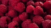 framboesa : Heap of fresh raspberries rotating. Closeup macro shot. Fresh berry series. 4k.