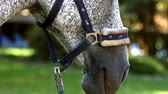 male animal : Silver horse closeup