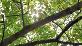 seletivo : Footage of some fresh green leaves on a tree blown by the wind Stock Footage