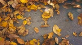 ev işleri : Gardener raking fallen autumnal leaves UHD 4K Clog footage Stok Video