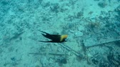 rift : Fish underwater in the Red Sea Stock Footage