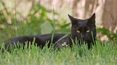 mew : Cute black cat in the summer Stock Footage