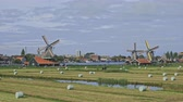 тюльпаны : Dutch windmills in Netherlands closeup footage