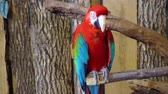 rod : Beautiful gracious neo tropical macaw genus colorful plumage ara parrot bird with long narrow tail in close up 4k shot