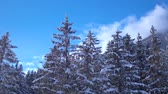 vadi : Amazing drone aerial flyover in clear blue sky over snow covered pine tree tops in Alps mountain forest landscape