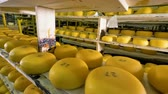 drying rack : Numerous pieces of cheese being stored at cheese plant. Stock Footage