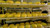 hard cheese : Huge quantity of cheese being stored at cheese plant. Stock Footage