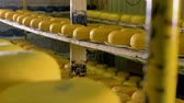 гауда : Great number of cheese being stored at cheese plant. Стоковые видеозаписи