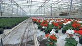 сектор : A utility corridor between different potted flowers in a nursery.