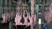 крюк : An industrial carousel full of hanging cleaned off chickens at food plant.