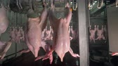 gutted : Chicken bodies transferred in and out of different processing stages at meet processing plant. 4K.