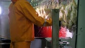 pintinho : Two workers in protective wear cutting chickens throats fast.