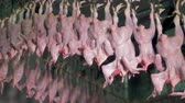 kanca : Chicken carcasses move on unending factory suspension rail. Stok Video
