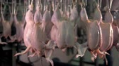 dead animal : Plucked and beheaded chickens moving on a poultry shackle line.