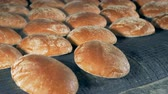 crusty : Round bread loaves leave the oven on a conveyor.