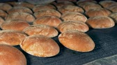 befejezett : Rows of baked round bread loaves move from a conveyor.
