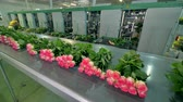 retailers : Timelapse footage of a flower processing equipment.