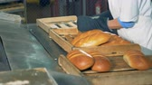 método : Baker is taking baked bread from the conveyor in a bread bakery.