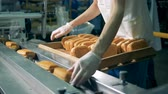 бублик : Worker in protective gloves put fresh baked rolls on a conveyor. Стоковые видеозаписи