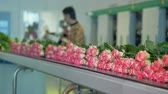 sektör : A busy worker sorting and loading roses in the blurred background.