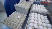 economia rural : Timelapse. Worker at poultry put fresh eggs in crates. Poultry farm. Vídeos