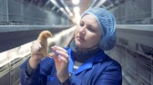 yukarıya bakıyor : Close up of a factory employee inspecting a small chicken Stok Video