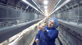 видя : A baby chicken is getting examined and then another one is also getting inspected by a female employee