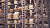 szyszka : Close-up view on ready ice-cream cones in cooling chamber. 4K.